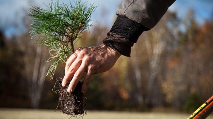 L'automne en général (et le mois de novembre en particulier) est la période la plus favorable pour les plantations.