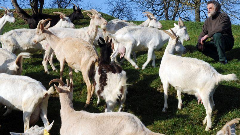 Les éleveurs de chèvres se disent dos au mur.