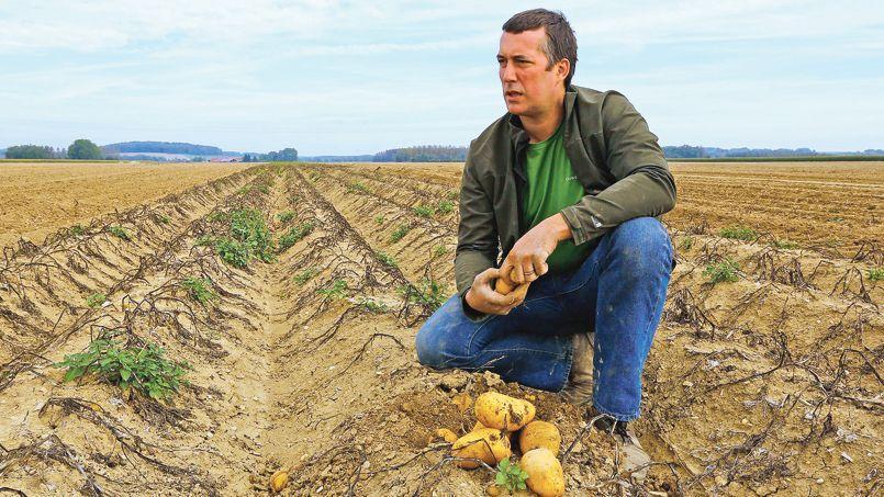 Charles-Édouard Gibrat, producteur à Revigny-sur-Ornain (Meuse), constate les dégâts après s'être fait voler une tonne de patates, le 2octobre dernier.