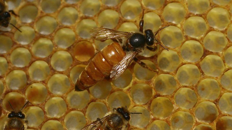 «Le miel importé, principalement de Chine, mais aussi d'Europe et d'Argentine, font certes l'objet de contrôles. Néanmoins, ceux-ci ne peuvent être systématiques.»