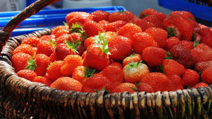 Sur les 125.000 tonnes de fraises consommées en moyenne chaque année en France, 60.000 à 70.000 tonnes viennent d'Espagne contre 45.000 tonnes d'origine française.