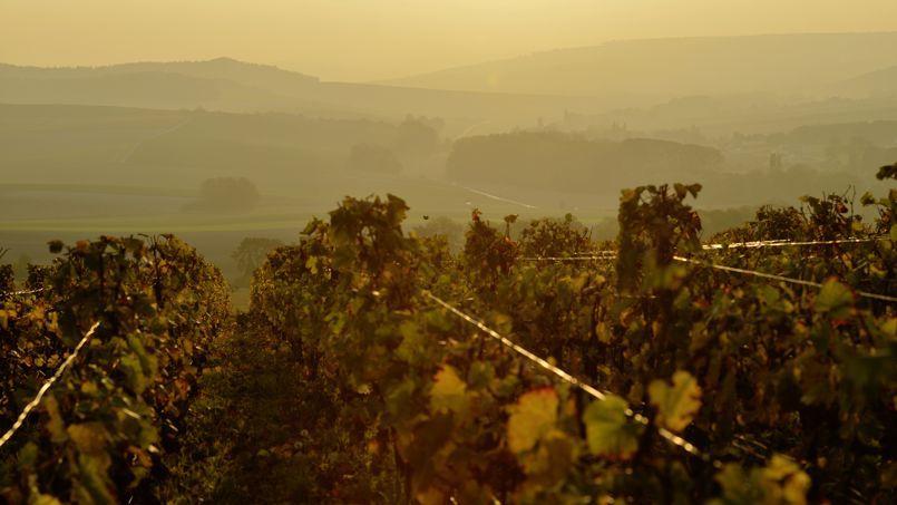 Combines, passe-droits, spéculation foncière : les municipales vues par Christian Combaz