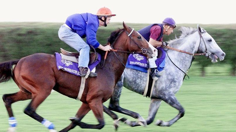 France galop fait miroiter la fortune sous le sabot d 39 un cheval - Comment dessiner un cheval au galop ...