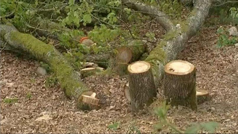 Au Creusot, le tueur d'arbres sévit toujours