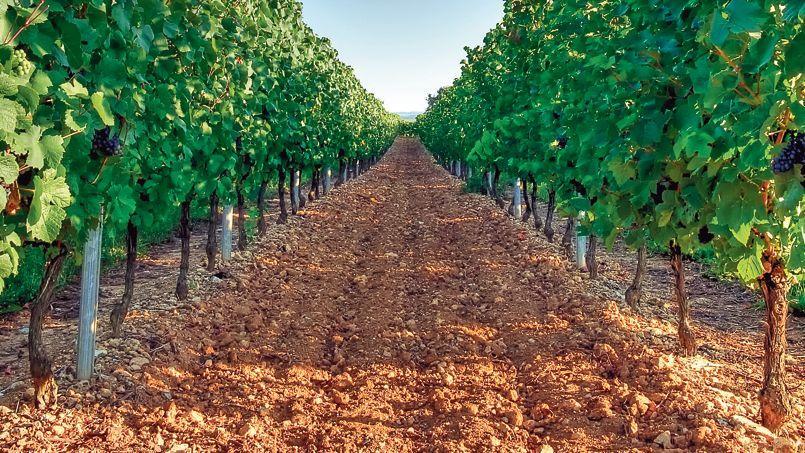 En 2013, la moitié des transactions en pleine propriété dans le Cognac se sont faites au profit de personnes morales, notamment russes.