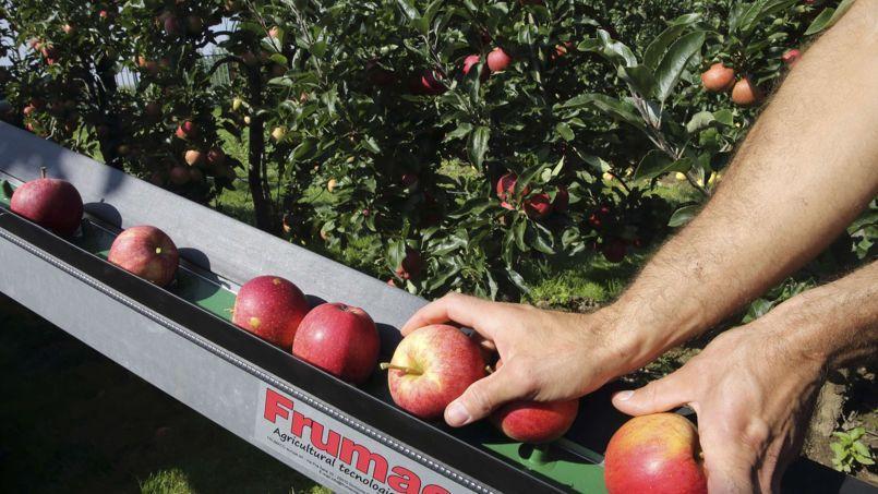 La France qui «commence à peine ses récoltes de pommes» ne serait pas concernée par ces fraudes, indique Luc Barbier, président de la FNPF