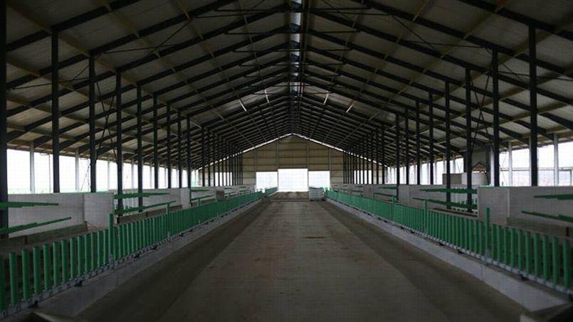 Vue de l'intérieur de la plus grande étable de France, capable d'accueillir à terme 1000 vaches.