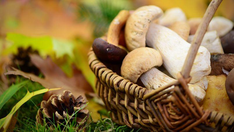 Connaître les bons coins à champignons n'est pas une mince affaire.