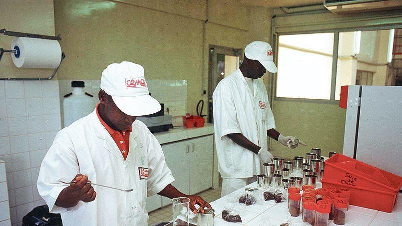 Transformation de fèves de cacao dans l'usine Cémoi installé à Abidjan.