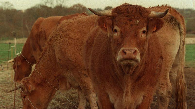 L'embargo américain pèse sur le bœuf européen depuis 1998, suite à l'affaire de l'ESB connue aussi sous le nom de la maladie de la vache folle.