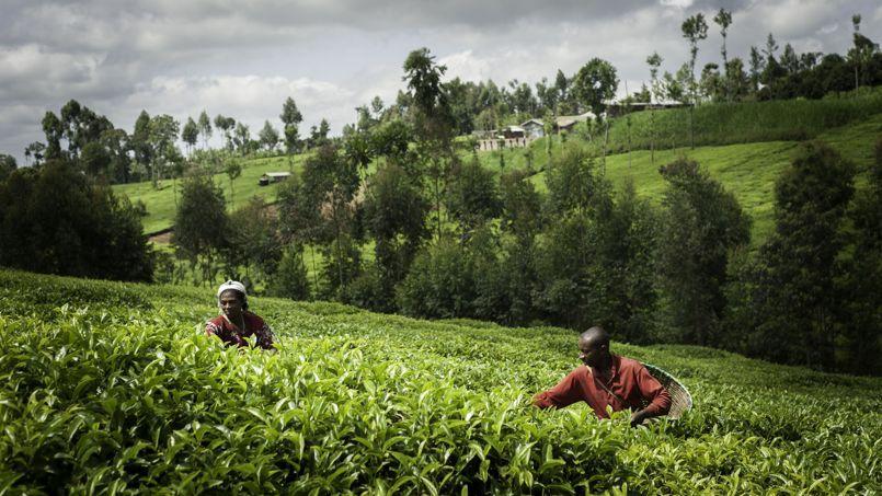 «Le fonds Livelihoods investira dans des projets de grande taille, en priorité dans des villages pauvres». Crédit: Nicolas Gauduchon