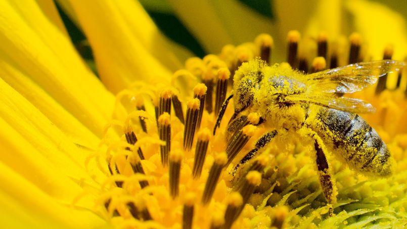 Le numéro un européen du miel se mobilise contre les pesticides