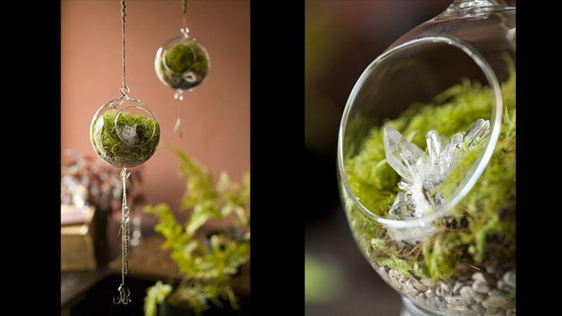 Terrarium l 39 art de cultiver son jardin int rieur for Jardin singulier 2015