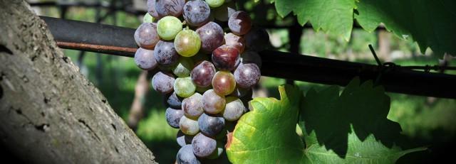 5 vins dont la valeur augmente