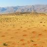 Dans des zones plus herbeuses, les cercles de fées ressemblent à des cicatrices dans le paysage. (Namibie)