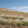 On voit clairement la différence entre l'herbe bien verte qui forme le cerlce de fée et les plantes environnantes, de la même espèce, tout désséchées. (Namibie)