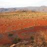Les termites des sables seraient à l'origine de la formation de ces étranges couronnes qui ont longtemps fasciné les botanistes. (Namibie)