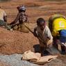 Seulement 2% des milliers de mineurs trouveront 1 ou 2 saphirs d'une qualité exceptionelle apte à les rendre riches.