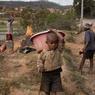 Le long des routes les familles coupent l'eucalyptus pour le charbon et le sapin pour les planches de construction.