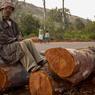 La déforestation s'explique par trois activités: la culture sur brûlis, l'exploitation forestière, et la production de combustible et de charbon de bois pour les usages domestiques.