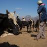 Au marché près de Tulear, voleurs et éleveurs se cotoyent pour vendre leur bétail.