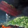 LES CHOUX DE LA COLÈRE. Au milieu des choux-fleurs, perdu dans les flammes et la fumée, l'homme coiffé d'un bonnet rouge, symbole des jacqueries antifiscales en Bretagne sous l'Ancien Régime, avance en hurlant sa colère dans un mégaphone. Le 26octobre, près de Pont-de-Buis, dans le Finistère, plus d'un millier de manifestants rassemblés contre le projet d'écotaxe du gouverment se sont heurtés à 150gendarmes mobiles et à une centaine de CRS, après avoir déversé des tonnes de légumes et enflammé des pneus.