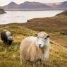 A l'exception de ces moutons, rien ne semble perturber la quiétude de ce lieu.