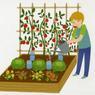 Je plante, ça pousse! de Philippe Asseray et Charlène Tong, Éd. Rusti'kid.