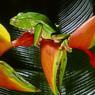 La vie nocturne s'anime dans le sous-bois de la forêt tropicale. Les grenouilles se préparent au festin d'insectes.