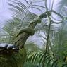 Dans le sous-bois de la forêt tropicale, un «Megasoma acteon», de la taille d'une main, reste figé sur sa branche, groggy par la fraicheur et la brume matinale.