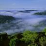 A la lisière du marais, le sous-bois de la forêt tropicale baigne dans une épaisse brume matinale. Magie des petits matins !