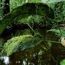 Entre marais et forêt s'épanouit un incroyable bestiaire guyanais : ici, un nid de colibris ou oiseaux-mouches.