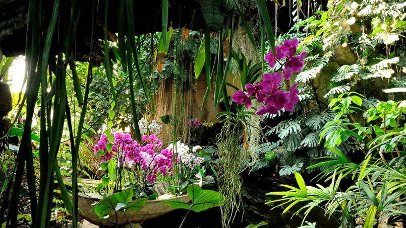 Le jardin des plantes c l bre les orchid es - Jardin des plantes paris horaires ...