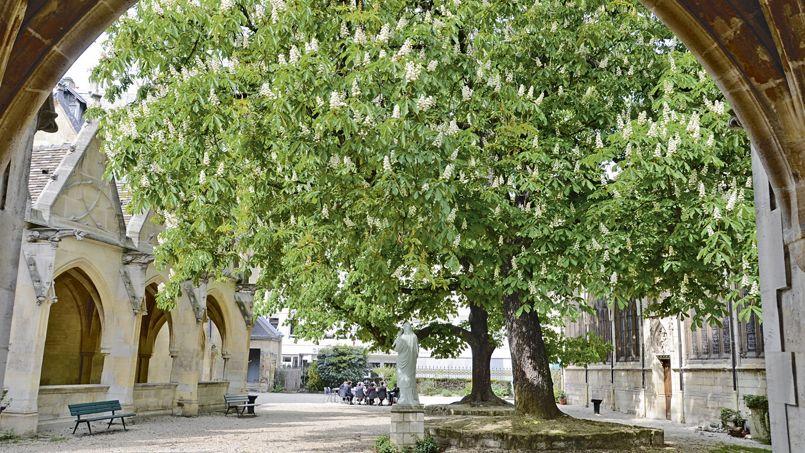 La d couverte des plus beaux arbres d 39 le de france for Beaux arbres de jardin