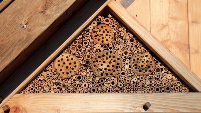o se procurer du bois non trait pour fabriquer un h tel insectes. Black Bedroom Furniture Sets. Home Design Ideas