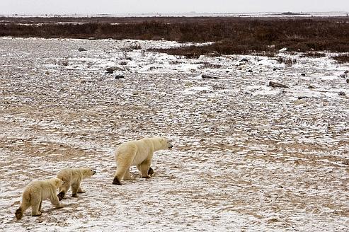 Le climat sous la menace de la fonte des sols arctiques
