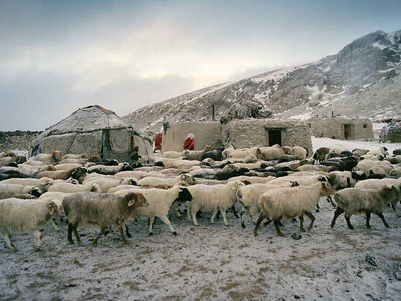 Les Kirghiz vivent entourés de leurs animaux. Des moutons, mais aussi des chevaux, deschameaux et des yacks.