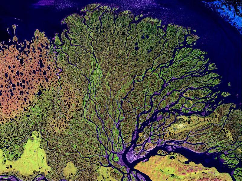On observe ici le delta du Lena, le plus oriental des fleuves sibériens. Long de plus de 4500 kilomètres, cest aussi lun des plus importants fleuves du monde. Les couleurs sur ce cliché ne sont pas naturelles. Les satellites de la Nasa peuvent en effet prendre des photos des infrarouges et des ultraviolets - rayons en principe invisibles l'oeil nu. Les couleurs choisies pour faire apparaître ces rayonnements le sont de manière arbitraire.