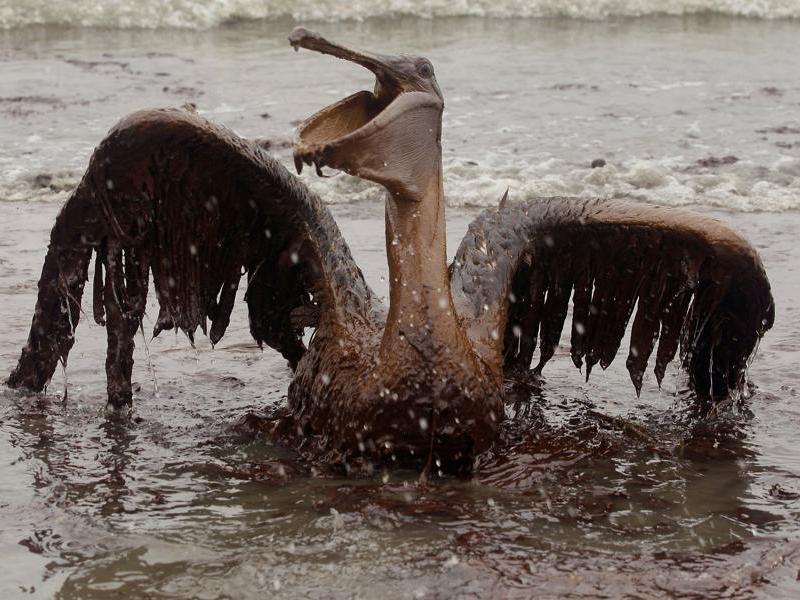 Les dispersants, déversés par dizaines de milliers de litres par BP dans le golfe du Mexique, sont censés réduire le pétrole en de fines particules biodégradables. Mais le brut épais arrive malgré tout sur les côtes.