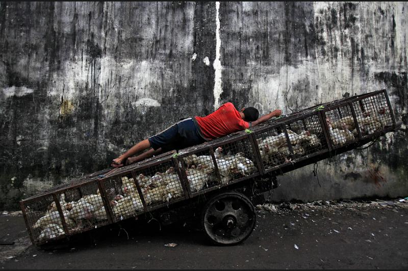Le 16 août, au marché de volaille de Mumbai en Inde. Le taux d'inflation est repassé à 90,97 en juillet contre 10,55 le mois précédent.