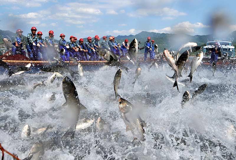 Lundi 20 septembre, ces hommes se sont réunis pour une pêche massive de poissons, au lac Qiandao, à Hangzhou, dans la province du Zhejiang, en Chine.