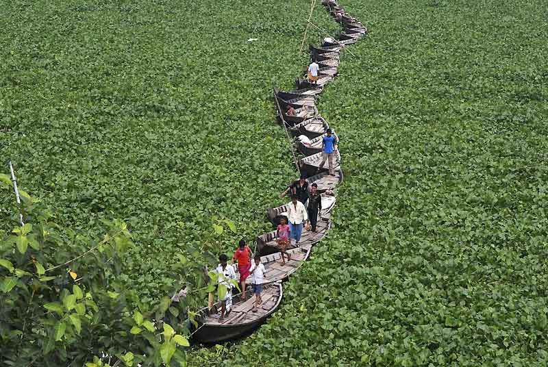 Cernés par les jacinthes d'eau qui tapissent la surface du fleuve de Buriganga, au Bangladesh, ces canots servent de pont et permettent la traversée, mercredi 22 septembre.