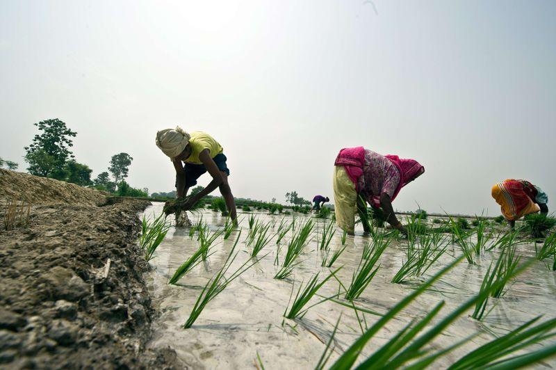 La mousson est déterminante pour l'économie indienne car l'agriculture dépend pour une large part des précipitations survenues durant cette période. Celle-ci, imprévisible, est très variable en fonction des années.