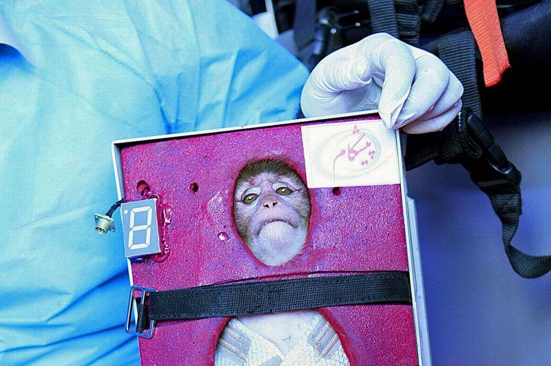 Singe cosmonaute. Le ministère de la Défense iranien a annoncé lundi avoir réussi avec succès l'envoi d'une capsule contenant un singe à 120 kilomètres d'altitude. Selon les médias iraniens, le singe serait revenu vivant de son voyage sub-orbital. Téhéran avait annoncé à la mi-janvier son projet d'envoyer un singe dans l'espace début février, dans le cadre des célébrations du 34e anniversaire de la victoire de la révolution islamique de 1979. Ce lancement était présenté comme une première étape avant d'envoyer «un homme dans l'espace d'ici 5 à 8 ans». Les Etats-Unis ont prévenu lundi que si la réussite de l'Iran était avérée, le pays aurait violé une résolution de l'ONU condamnant son programme balistique.