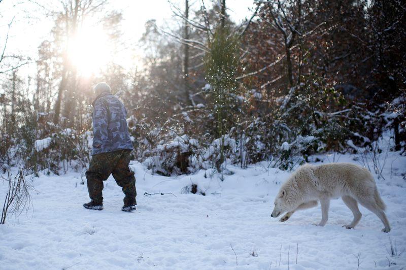 Habitant dans un chalet en bois en bordure du sanctuaire, Werner Freund vit quotidiennement au contact des loups .