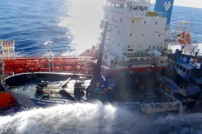 Eperonné. Les baleiniers japonais et les bateaux de l'association écologiste Sea Shepherd se sont à nouveau accrochés dans les eaux glacées de l'Antarctique, chaque partie accusant l'autre d'être l'agresseur. Selon Paul Watson, fondateur de Sea Shepherd, le navire-usine japonais Nisshin Maru a heurté volontairement le bateau Bob Barker, qui fait partie de la flotte partie pourchasser les baleiniers pendant la campagne de chasse. Mais sur son site internet, l'institut japonais de recherche sur les cétacés, qui cogère la pêche, accuse plusieurs navires de Sea Shepherd d'avoir visé le Nisshin Maru lorsque ce dernier tentait de s'approvisionner en carburant auprès du pétrolier.
