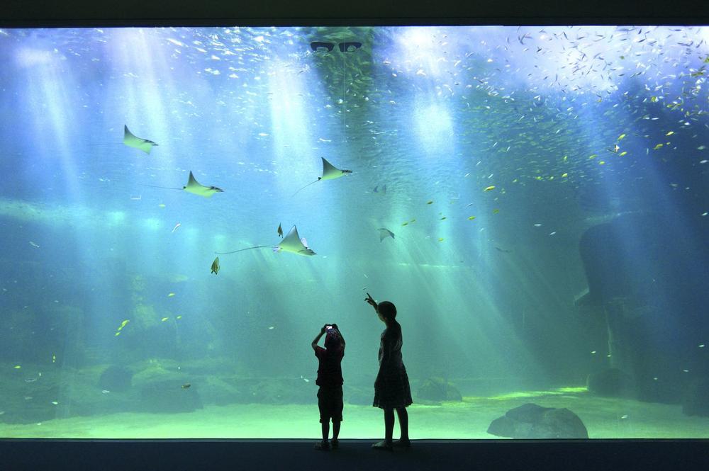 Côte d'Opale: Nausicaa en eaux profondes