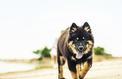 De nombreux chiens victimes de la leishmaniose chaque année