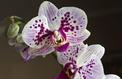Orchidées, plantes vertes: cultivez votre jardin intérieur
