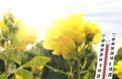 Jardin: comment aider vos plantes à supporter la canicule